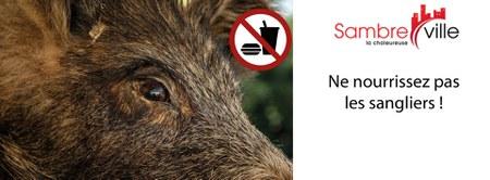 Nourrissage des sangliers - Avis à la population !